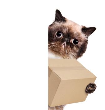cat delivering hyaluronic acid serums